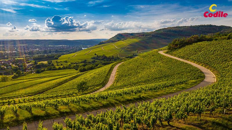 Vinos tintos con denominación de origen La Rioja